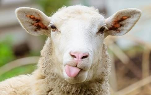 11 Usaha Ternak Menguntungkan di Lahan Sempit dan Modal Kecil